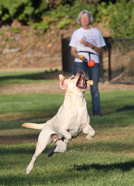 Action doggie