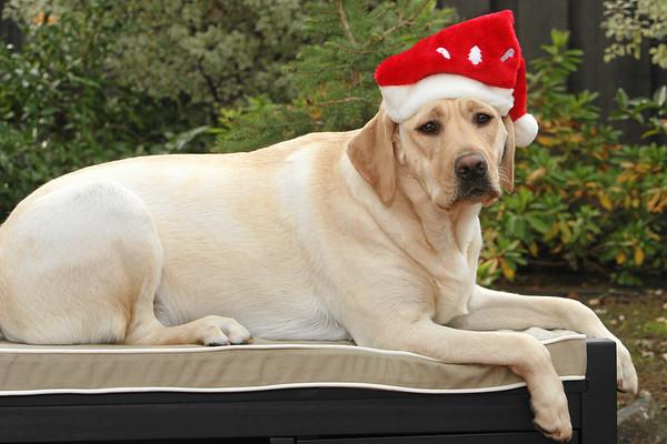 Sad-looking Santa
